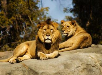 Best Zoo Cams Streaming Live Video