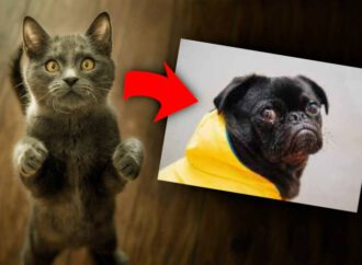 You can trick image-recog AI into, say, mixing up cats and dogs – by abusing scaling code to poison training data • The Register