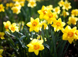 Spring equinox 2020: When is it and where does the term come from?