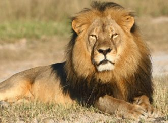 British hunters have killed at least 60 lions since Cecil shot, as ministers delay trophy imports ban again