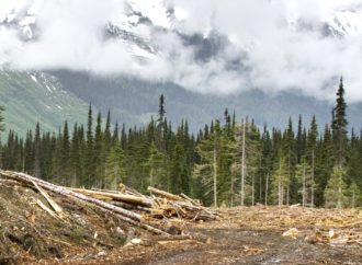 How forest loss has changed biodiversity across the globe over the last 150 years