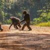 Chimpanzees in volatile habitats evolved to behave more flexibly – it could help them weather climate change